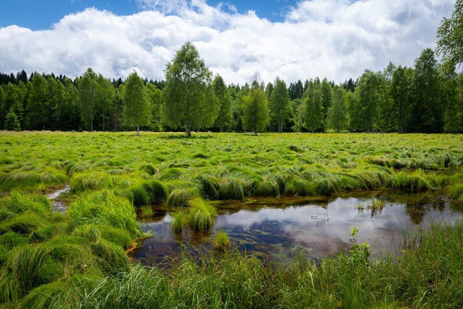 Revitalizace pramenišť a rašelinišť v Malém Boru