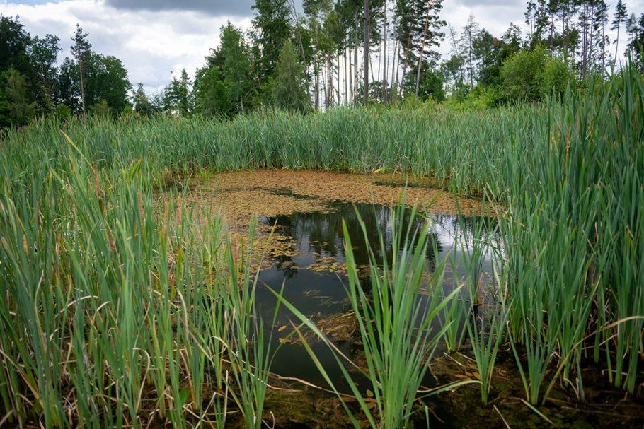 Ozdravení vodního režimu naLesnovských mokřadech