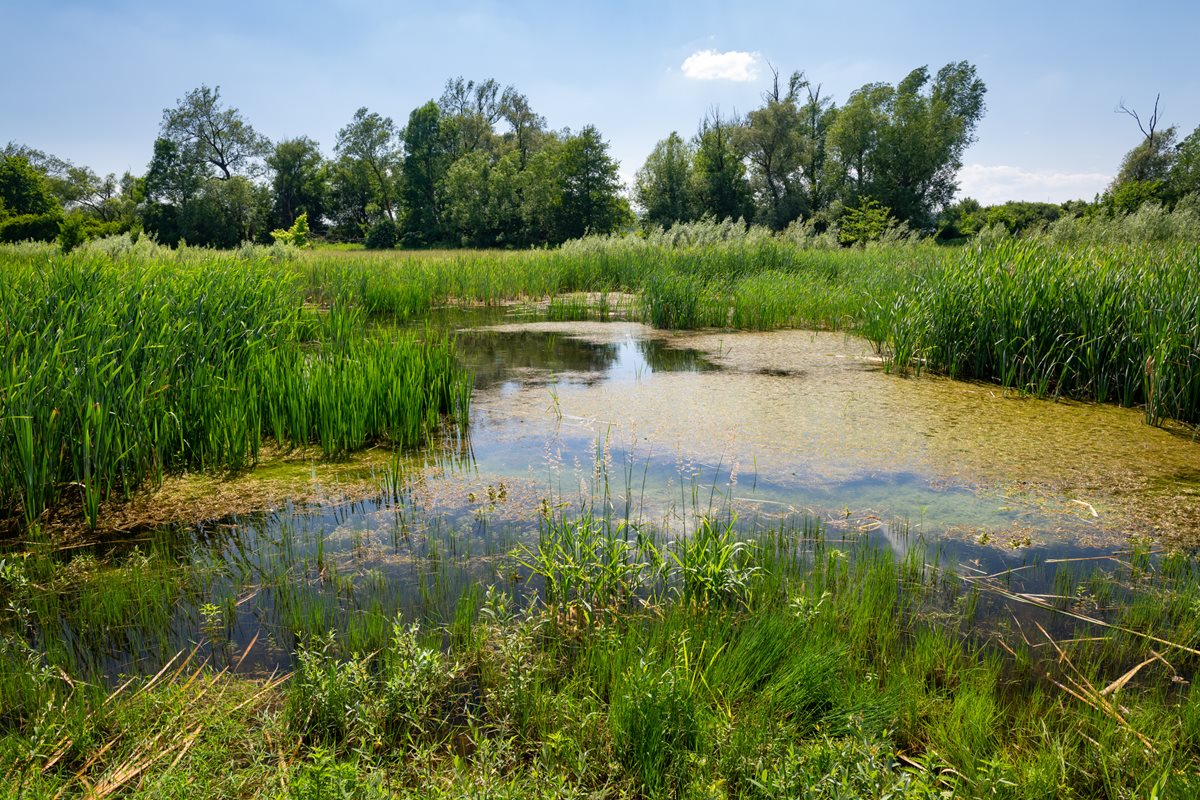 Znovuoživení řeky Nivničky uUherského  Brodu