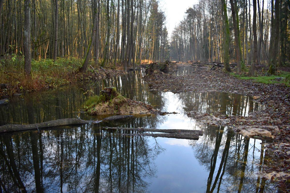 Revitalizace Zádolského potoka