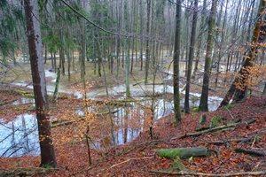 Stav po revitalizaci - celkový pohled na zaplavený les.