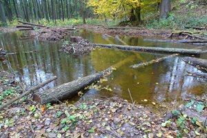 Stav po revitalizaci - drobné vodní plochy - tůně s mrtvým dřevem.