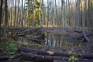 Stav porevitalizaci - pokácené dřeviny (kmeny a pažezy z odstraněného valu) byly ponechány jako mrtvé dřevo.
