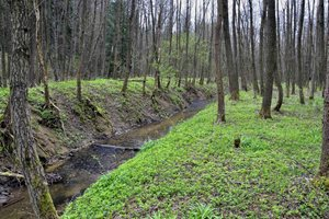 Stav před revitalizací - vodní tok rychle odvádí vodu a nekomunikuje s nivou.