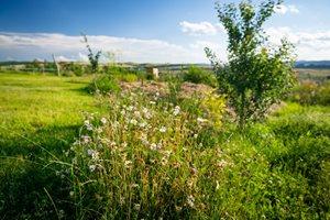 Jednou za čas je potřeba posekat každou zahradu. Ale můžou se nechávat ostrůvky květů pro hmyz.