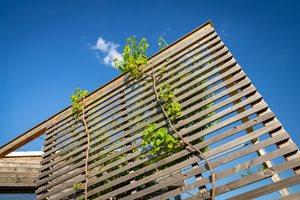 Dřevěná pergola postupně zarůstá vínem. Než bude celá porostlá, využívají majitelé ke stínění oken jednoduché rolety.