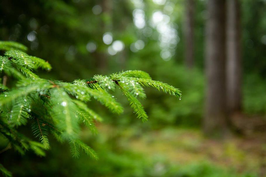 Nepasečné hospodaření vlesích uKlokočné