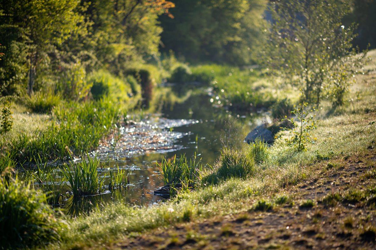 Revitalizace Litovického potoka